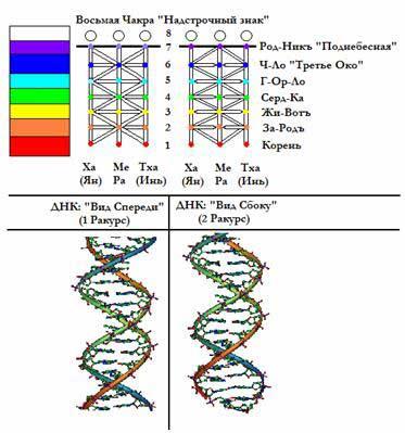 Снизу для сравнения приведены кодоны и триплеты ДНК человека. Поэтому именно Руны способны в наиболее полной степени передать волновые характеристики ДНК или, можно сказать, что «генетический код написан на этом языке».